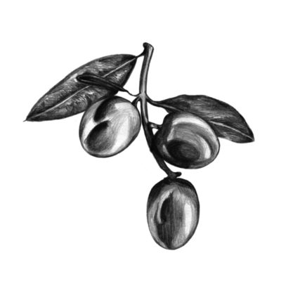 Olives_Accueil-02